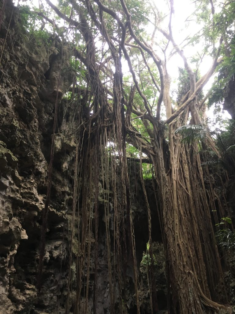 沖縄ガンガラーの谷